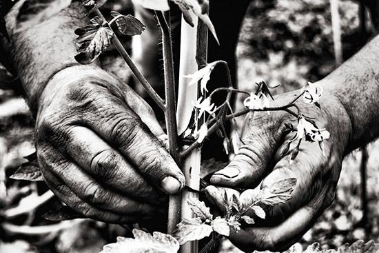 41-sibilla-fanciulli-aiutandolo-a-crescere